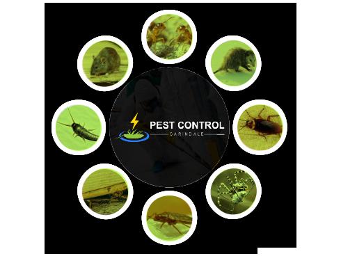 Pest Control Carindale